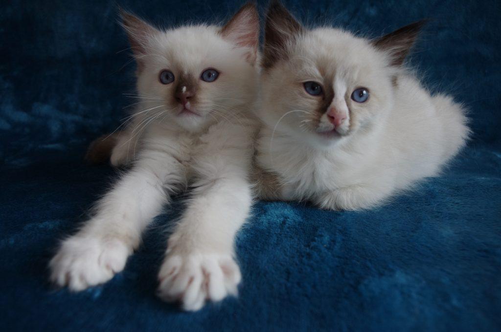 Felix und Feivel